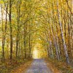 Road to Maple Corners 24x1832x2436x48