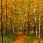 Birch Trees of New England 16x1224x1832x2448x36