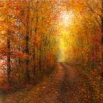 A Misty Autumn Road 16x2424x3648x72