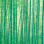 Green Bamboo24x1840x3048x36