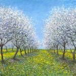 Cherry Blossoms16x2424x36